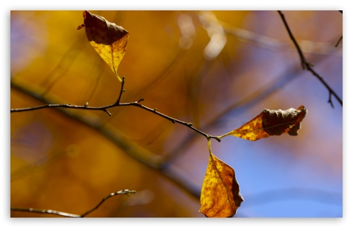 Download Whithered Autumn Leaves UltraHD Wallpaper