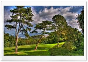 Trees At Summer, HDR