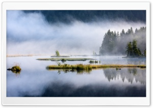 Forest Lake, Nature, Mist