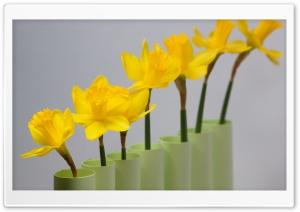 Daffodils Row