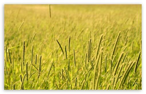 Download Grass Field, Summer UltraHD Wallpaper