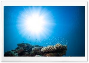 Pacific Ocean Underwater Animals