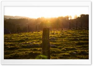 Sun Shining on Fence