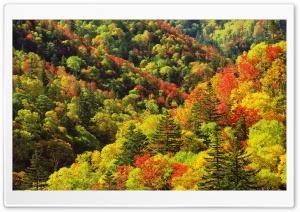 Autumn, Forest, Japan