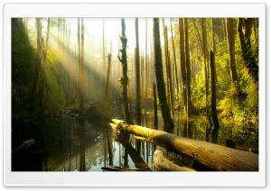Nantou County Forest