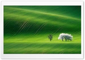 Green Hills Nature Scenery