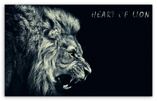 Download Lion UltraHD Wallpaper