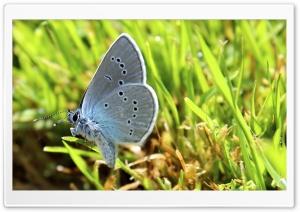 Butterfly in Diamonds