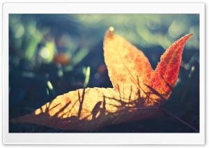 Fallen Leaf Bokeh