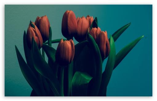 Download Tulips Vintage UltraHD Wallpaper