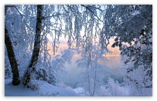 Download Beautiful Winter Frost UltraHD Wallpaper