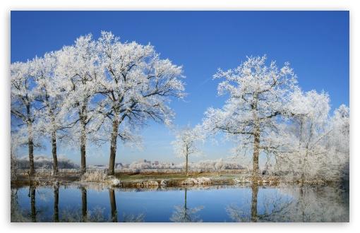 Download Frosty Trees UltraHD Wallpaper
