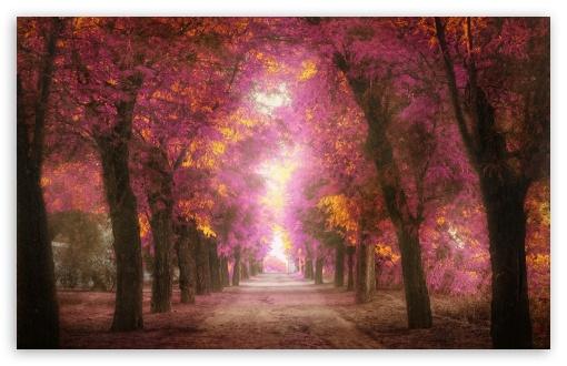 Download Pink Park UltraHD Wallpaper