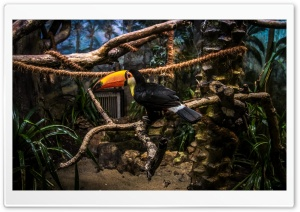 Toco Toucan Perched in Tree