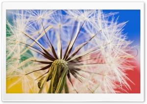 Dandelion Seeds Macro,...