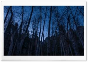 A Crescent Moon Rises Above...