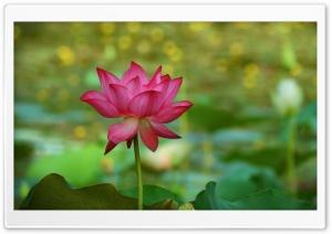 Lotus 5K