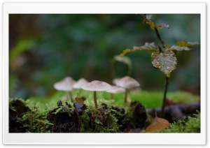 Mushrooms, Moss, Macro