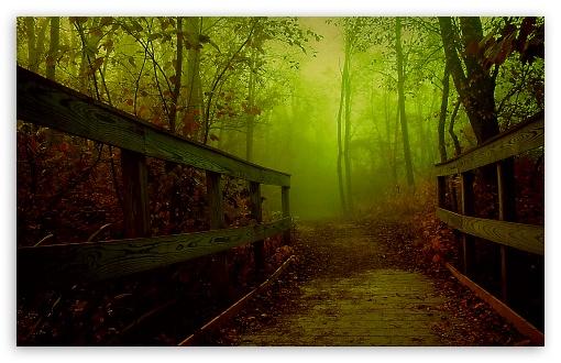 Download Forest Bridge UltraHD Wallpaper