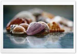 Shells Macro