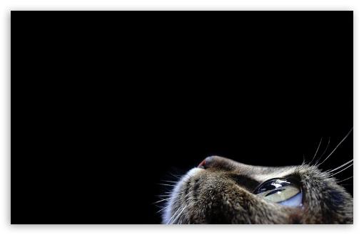 Download Curious Cat UltraHD Wallpaper