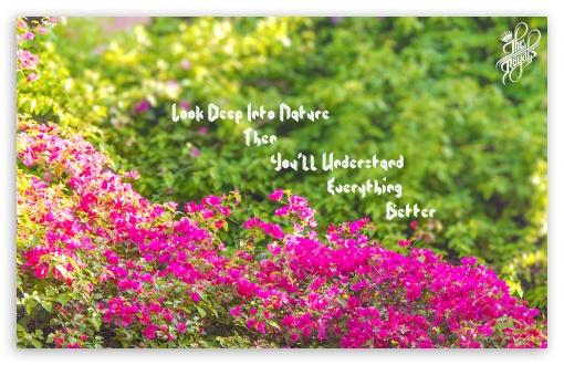 Download Deep Nature UltraHD Wallpaper