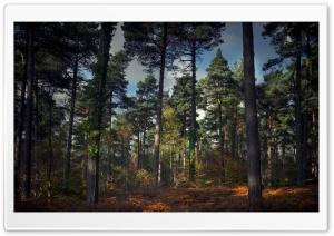 Autumn Scene Bracken Woodland