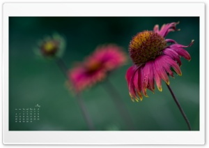 May Flower Calendar