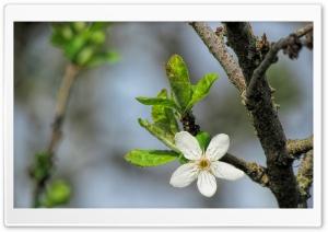 Blossom Flower Macro