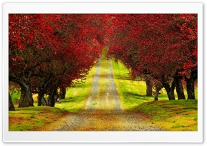 Red Foliage Trees Road