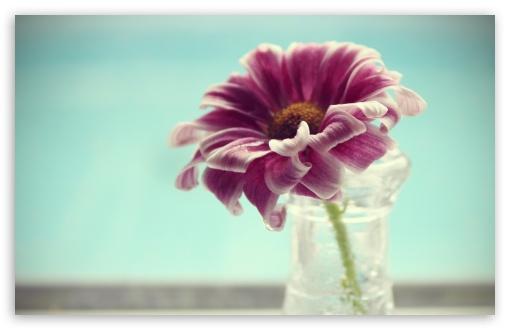 Download Violet Flower In Vase UltraHD Wallpaper