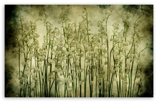 Download Lily Of The Valley Vintage Texture UltraHD Wallpaper