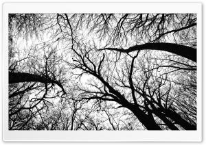 Pecan Grove Black And White