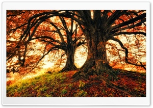 Beautiful Fall Trees Background