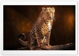 Beautiful Leopard Animal