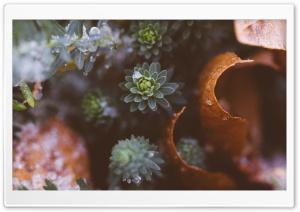 Plants Nature