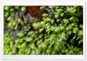 Sparkling Starry Moss
