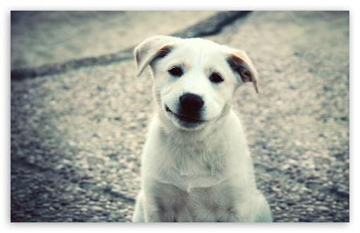 Download Smiling Puppy UltraHD Wallpaper