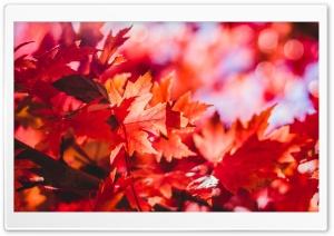 Red Foliage, Fall