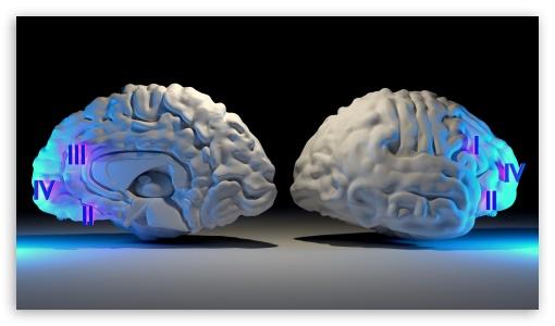 Download Brain Hemisphere UltraHD Wallpaper