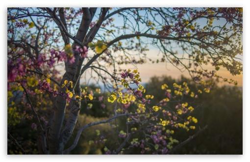 Download Pink Blossom Tree UltraHD Wallpaper
