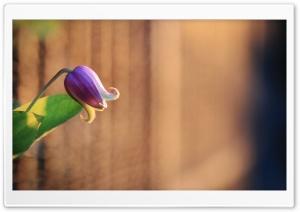 Bell Like Flower