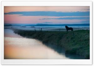 Horse, Landscape