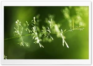 Grass Spikes Macro