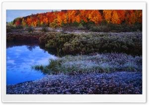 Autumn Hoar Frost