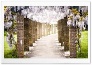 Wisteria Tree Tunnel