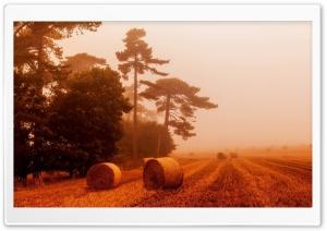 Straw Rolls, Orange Fog