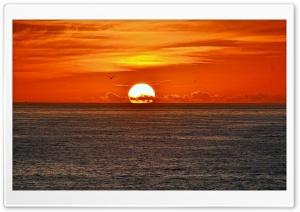 Sunset Sea Bird