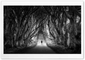 Dark Hedges, Avenue of Beech...