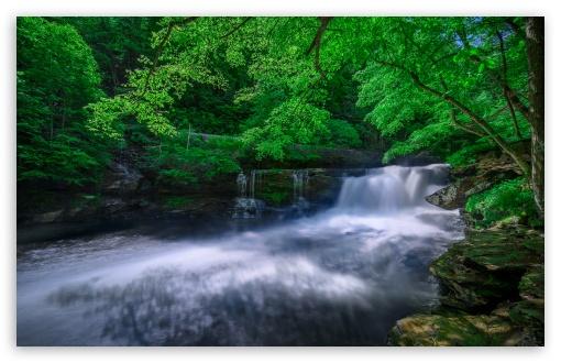 Download Forest Creek UltraHD Wallpaper